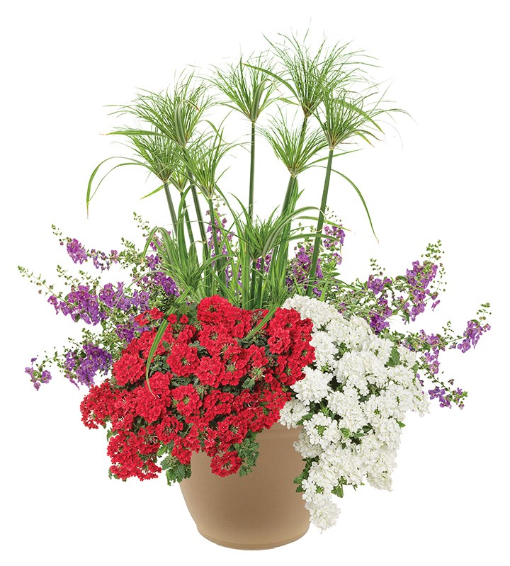 /Images/johnsonnursery/product-images/American Rhythm planter website_xjgx5nk4w.jpg