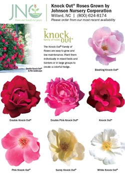 Knock Out Rose Chart