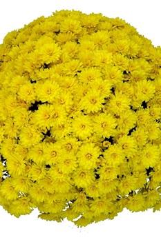 /Images/johnsonnursery/product-images/Allegra_yellow_4str7wlxc.jpg