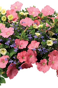 /Images/johnsonnursery/product-images/Bermuda-Skies-website_a3rt6qdff.jpg