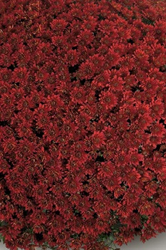 /Images/johnsonnursery/product-images/Contiki_red_6ulng50mc.jpg