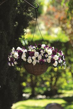 /Images/johnsonnursery/product-images/Pansy_Cool_Wave_Berries_N_Cream_Mix_Basket_6842_web_4vumk4ces.jpg