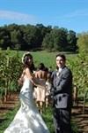 Addison Farms Vineyard - 1